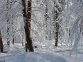 winter_07